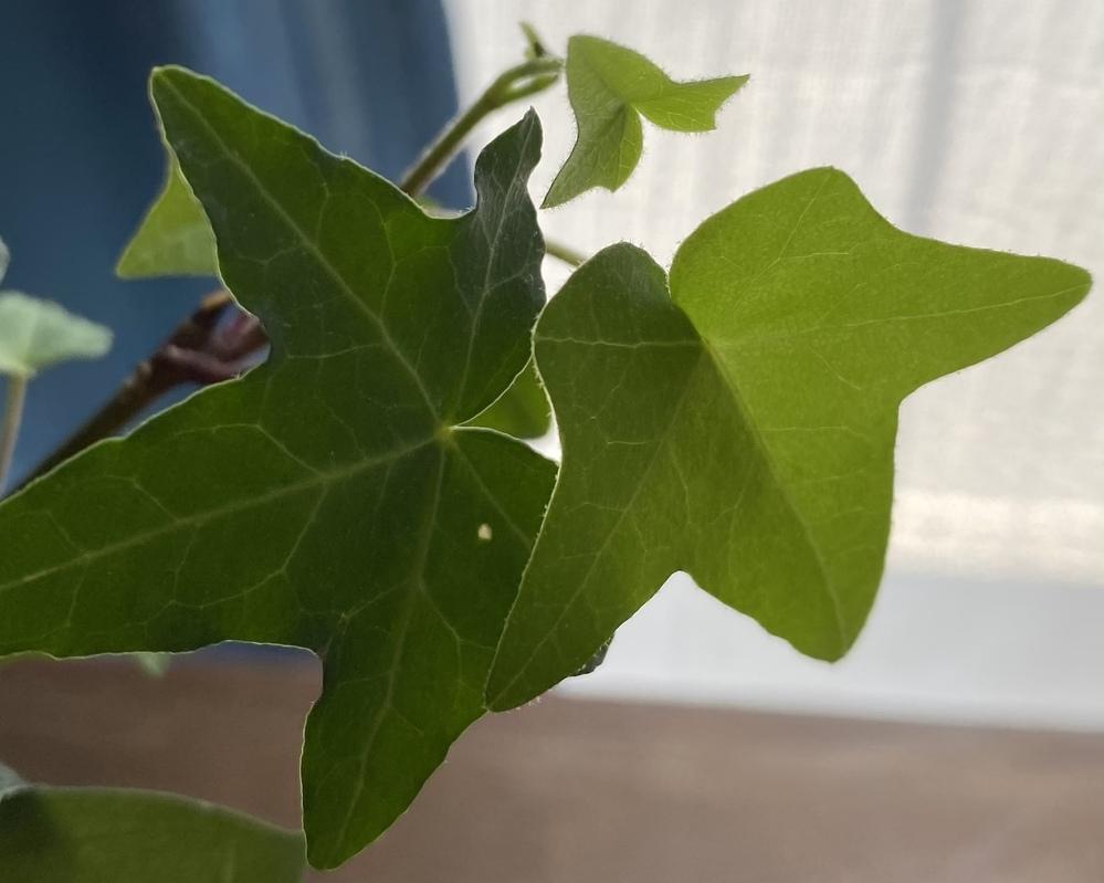 いただいた花束に入っていたのですが、こちらは何という名前の植物でしょうか。 花瓶に入れて飾っていましたら茎から根が出てきたため、鉢植えをしてあげた方がよいのか悩んでいます。