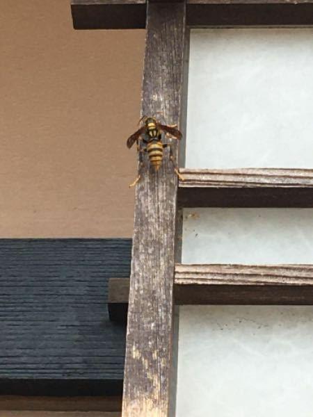 これは何バチですか?