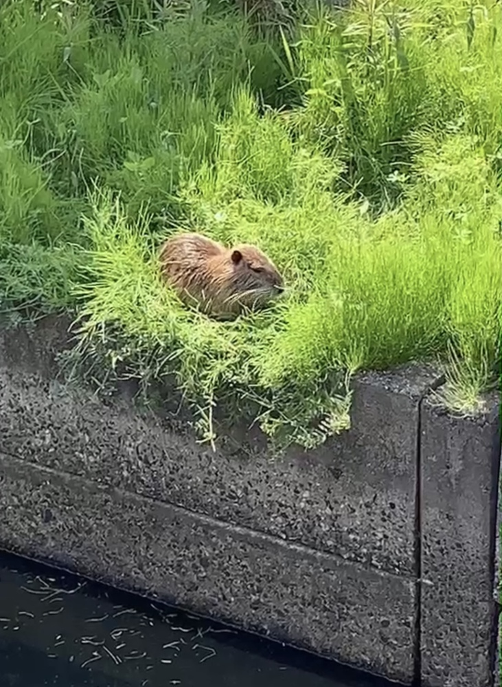散歩をしていたら、見つけました。 なんの動物ですか?? 草を食べていました。
