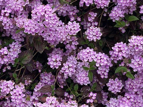 これってなんの花ですか?