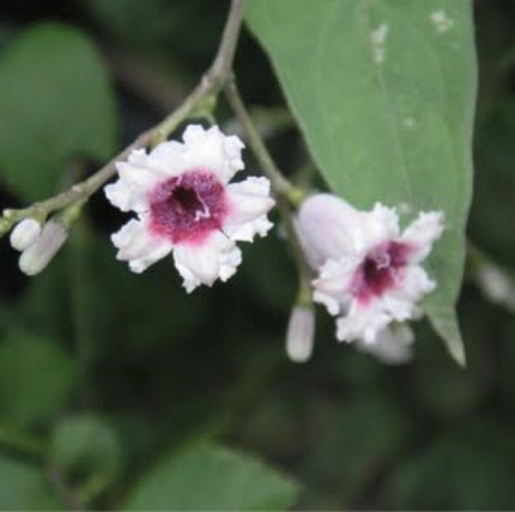 この花の名前を教えてください(TT)