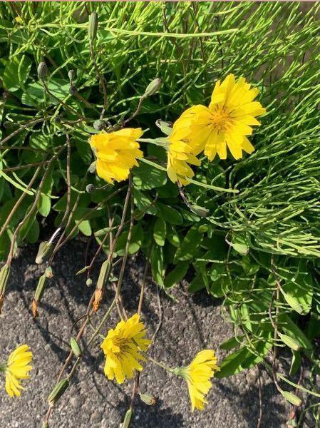 友人が撮った写真なのですが、 これは何という名前の花でしょうか? ご存知の方いらっしゃいましたら教えてください。
