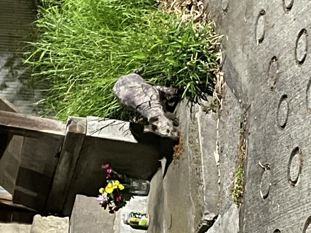 この動物は何ですか?川崎市です。 画像が荒くてすみません。