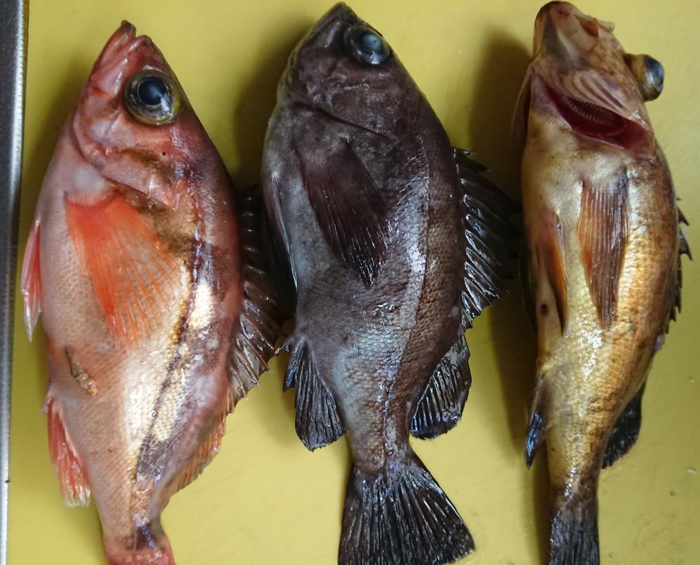 大至急です! 出掛けている間に祖父が知り合いから魚を頂きました。 どんな食べ方をすればいいでしょうか? 全体的に小ぶりです。