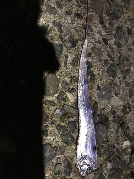 この魚の名前は何ですか?