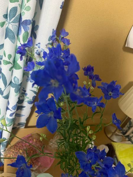 これなんの花ですか?