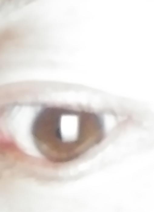 お世話になります この瞳の色は何色になるのか分かる方 教えてください。