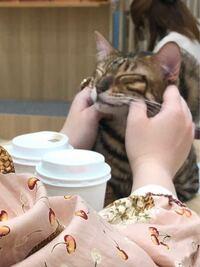 猫カフェの猫なのにこんなことになってます。いいんですか?