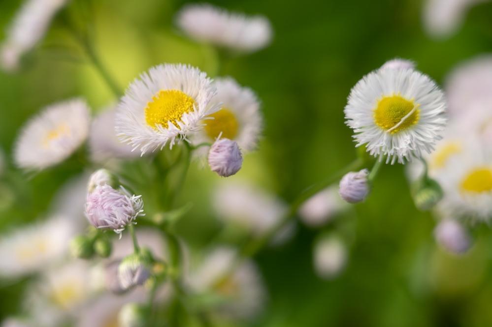 このお花の名前を伺いたいです。 4月に咲いておりました。