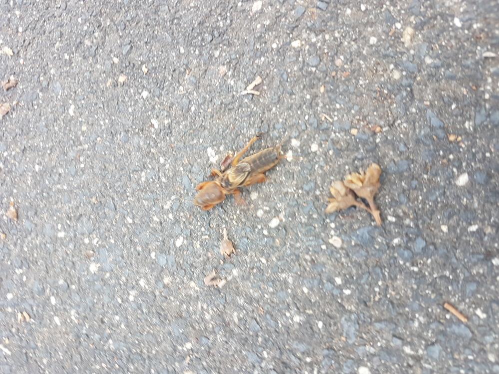 この虫、何ですか?