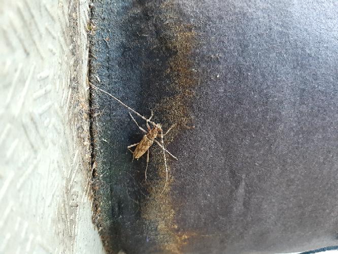 この虫の名前は何ですか、害虫ですか