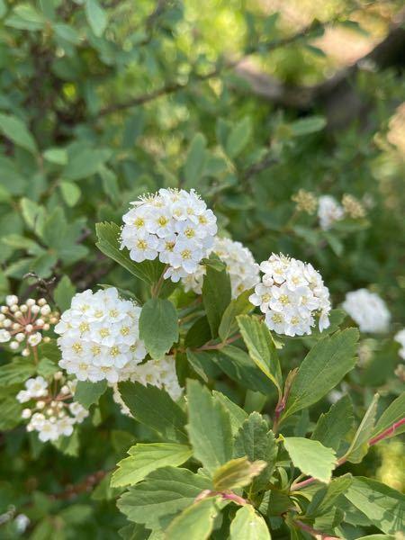 公園で見つけたこの花の名前わかる方いますか?