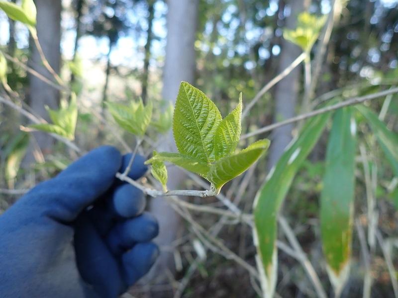 この植物の名前を教えてください 2