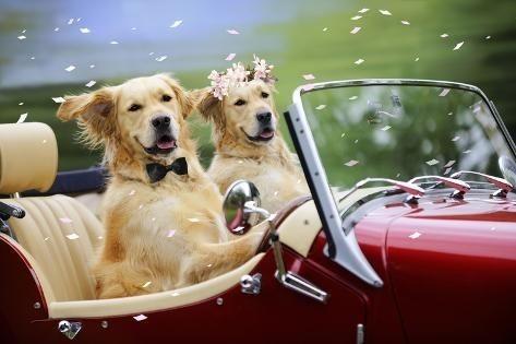 人間より、犬のほうが幸せだと思いませんか?