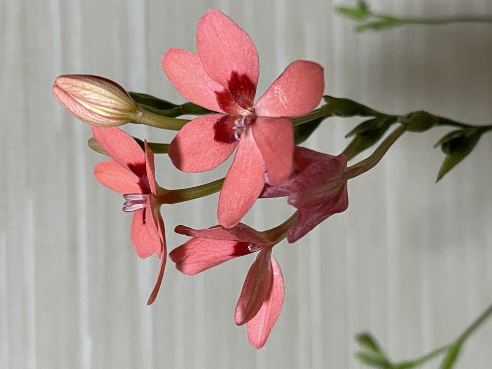 この花の名前を知りたいのですが、誰かご存知ないでしょうか?