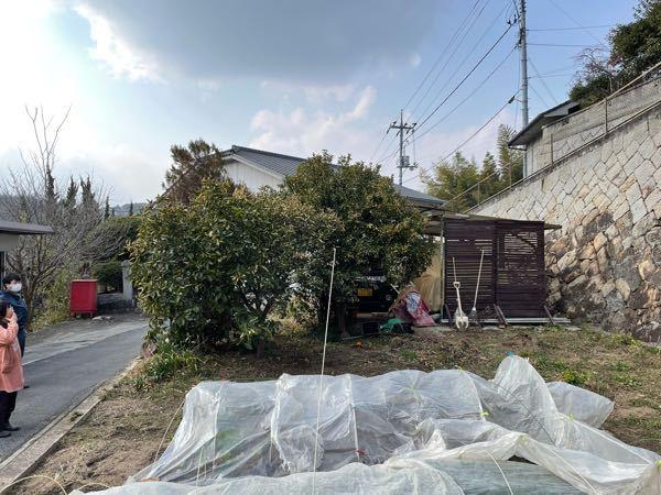 柑橘系 高さ2m 10年ものの カボス、キンカンの移植は 可能でしょうか? よろしくお願い申し上げます。