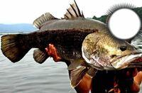 この魚なんでしょうか? 種類わかる方いらっしゃいましたら教えてください