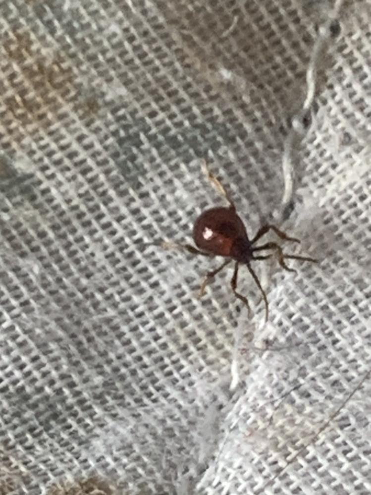 これってなんの虫ですか?