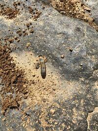 土の中から出てきたんですが 何の幼虫かわかりますか?