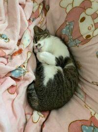 猫を温めて抱っこするとブロロロって喉から鳴ってますけどこれ機械入ってます?