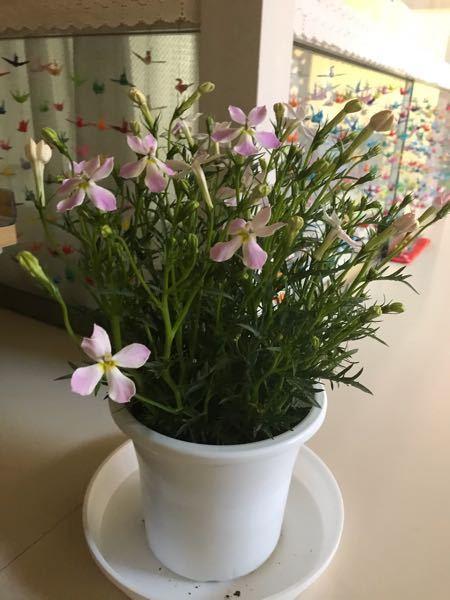 質問します。この花 の名前は、何というか教えて頂きたいです。宜しくお願いします。