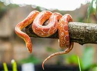 この蛇の名前を教えて欲しいです。 詳しい方よろしくお願いします。