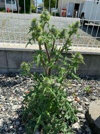 この植物はなんでしょうか?