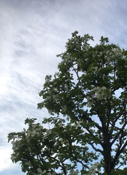 この木は、3、4月に撮影しました。 名前は何という木ですか? おわかりの方、ご回答よろしくお願いします。