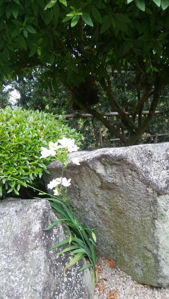 この花は何という花でしょうか?ご存知の方よろしくお願いします。