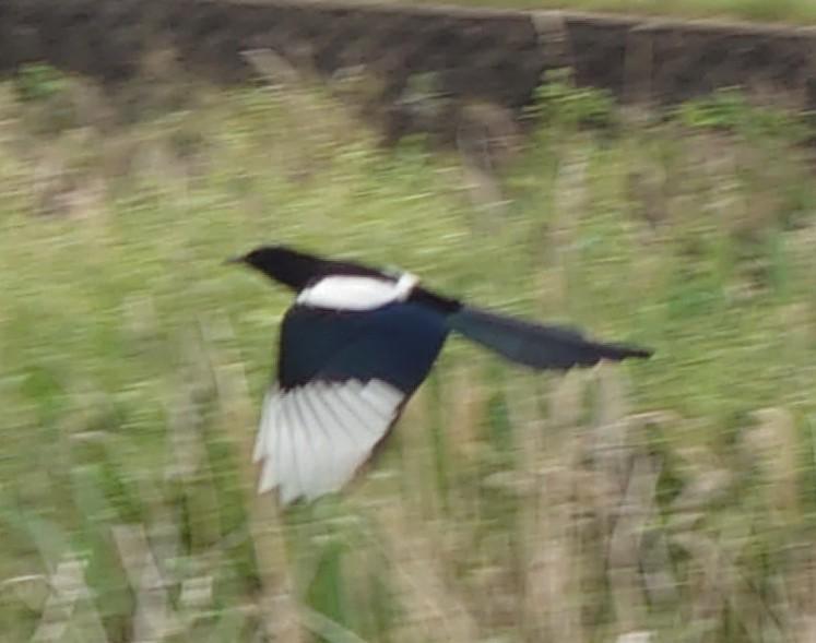 何て鳥ですか?