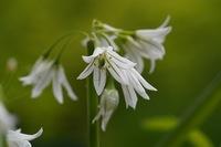 ④植物園で見たお花です。  名前を教えて下さい。 宜しくお願いします。
