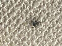 このクモの種類を教えてください。