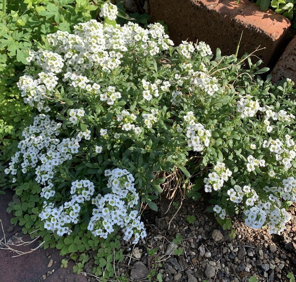 こちらのお花(野草)の名前ご存知の方、教えていただけますでしょうか。よろしくお願いします。