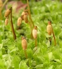 こちらの植物のお名前ご存じのかたいらっしゃいましたら教えてくださいm(__)m