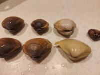 潮干狩りで貝を取ったのですが アサリなのかハマグリなのかバカ貝なのか… 一番右はアサリ?だと思うのですが ハマグリとバカ貝の見分けが 調べてもどうも分かりません。 お詳しい方ご教示頂けると有難いです。