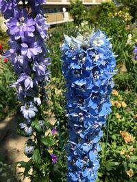 添付画像の植物の名前を教えてください。本日撮影大阪です。
