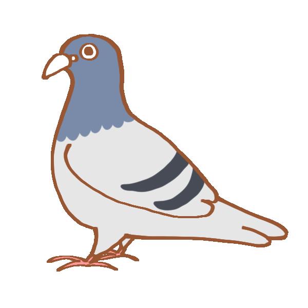たまに鳩が死ぬほど嫌いな人がいますが、 それって何故でしょうね?