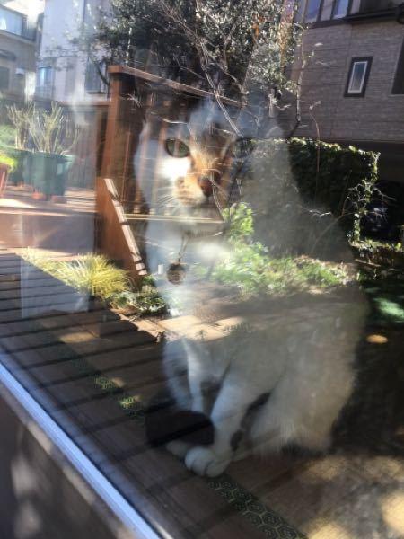 窓辺の猫ちゃんは好きですか?