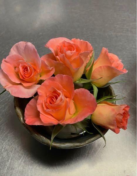 頂き物のバラです。 細い蕾がかわいくて気にいったのですが 名前がわかりません。 候補でもよいのでおしえてください。 よろしくお願いしますm(__)m