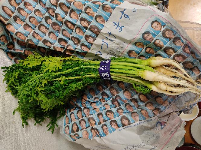 市場でグリーンフリルという野菜を買ったのですが、白い根の部分は食べられるのでしょうか?また、食べられるのなら、おすすめの食べ方はありますか?ご存知の方、教えてください。