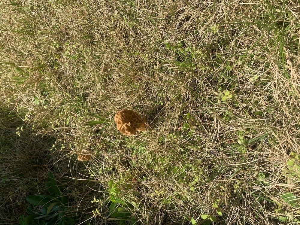 最近、庭に、いくつも生えてる、キノコみたいなもの、なんだか解りますか?