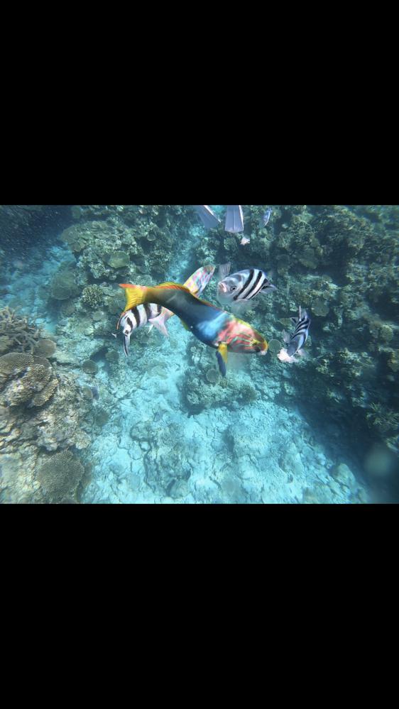 この真ん中にいるカラフルな魚の名前はなんですか? 沖縄の海にいました。