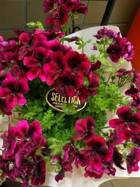 こちらの花の名前を教えていただけますか。