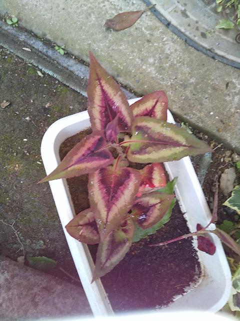 こちらの植物の名前を教えて頂けますか?