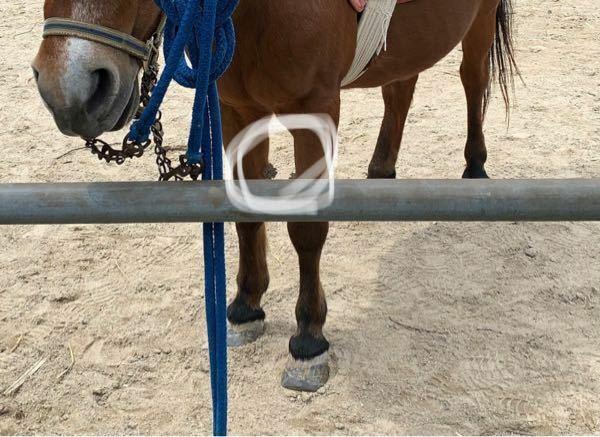 牧場で馬を見たのですが、前膝?のあたりになにか枝のようなものがたくさん生えてました…これはなんなんですか?少しゾッとするような感じです…
