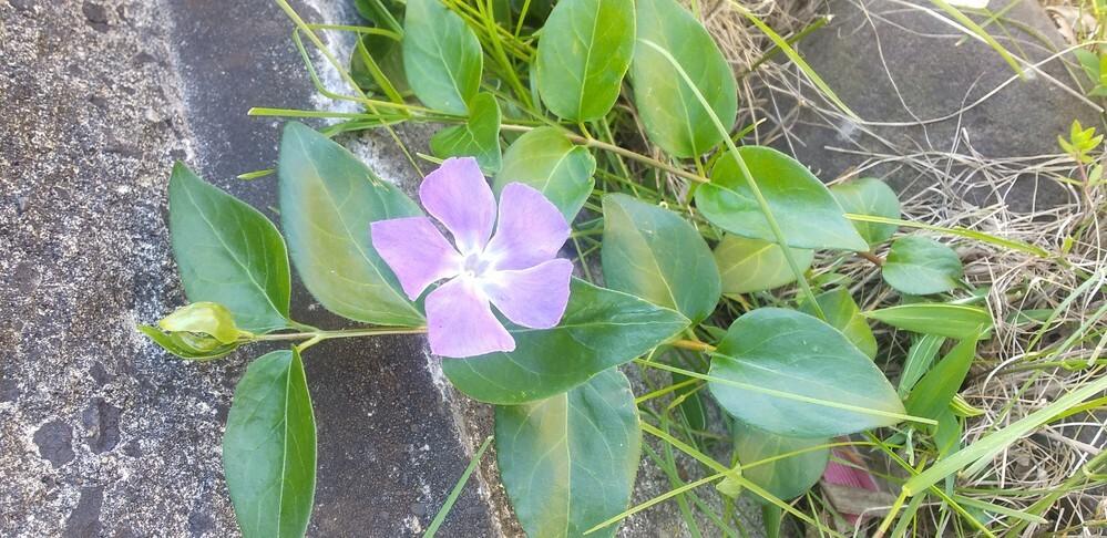 この花の名前教えてください。