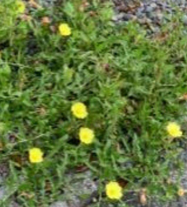 これは、何という花ですか