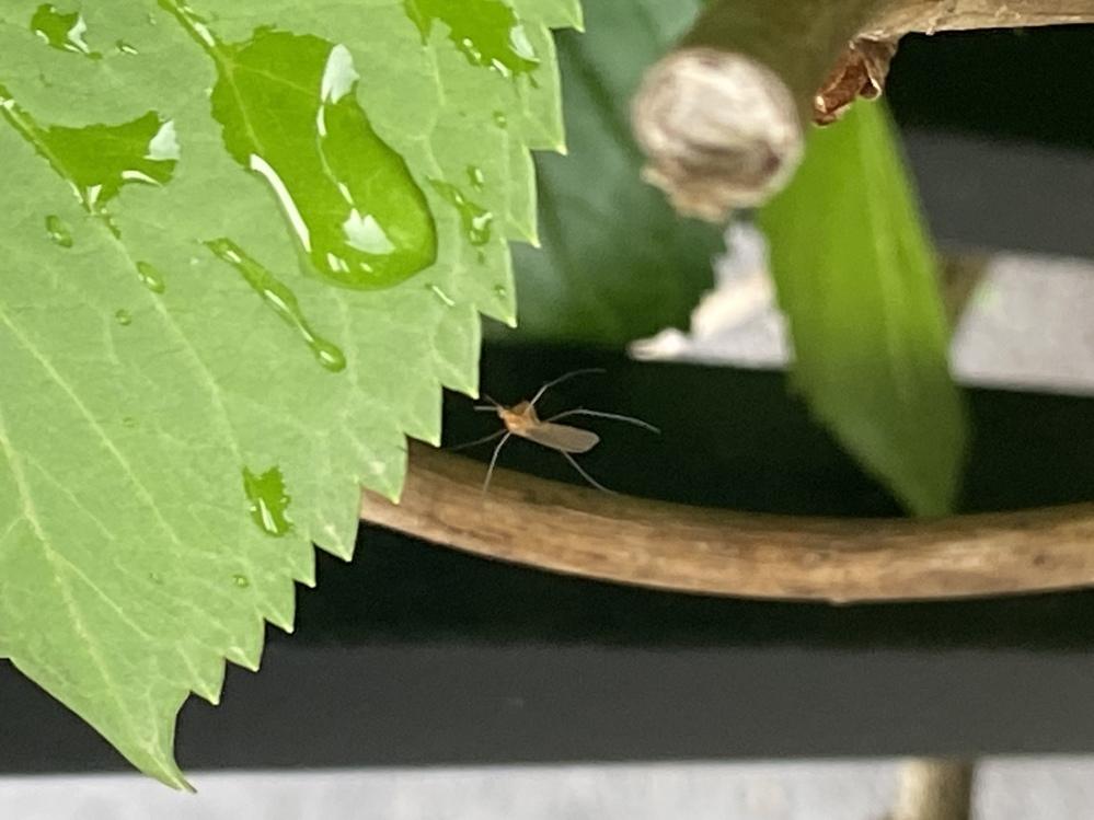 前足だけでぶら下がっている昆虫がいました。 何という昆虫でしょうか?