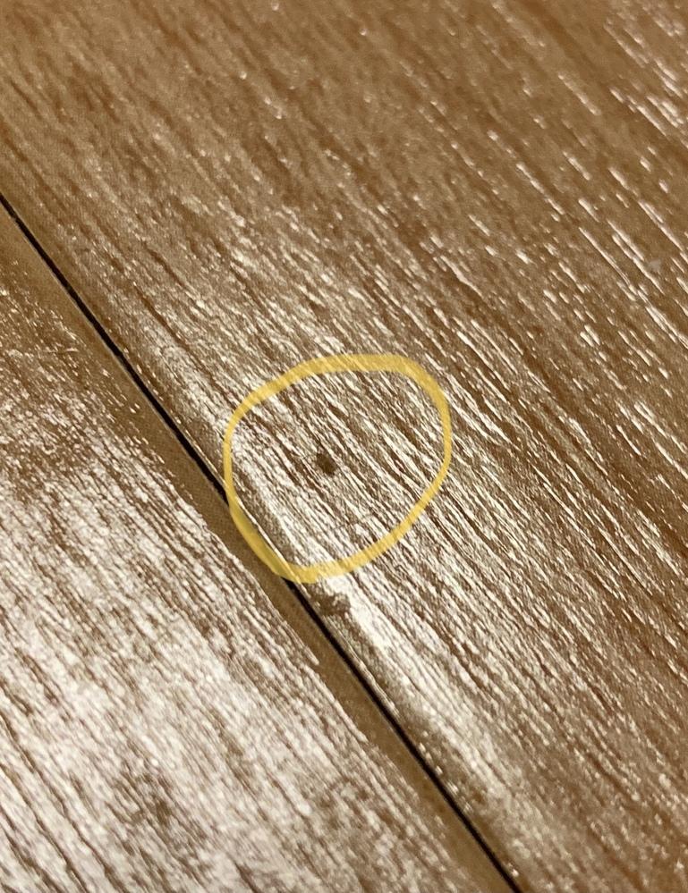 入居して1週間です。フローリングに触角を持った極めて小さな虫を発見しました。結構います。こちらの虫はゴキブリでしょうか?