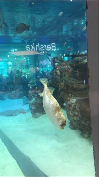 何という名前の魚ですか?